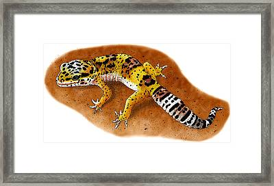 Leopard Gecko Framed Print by Roger Hall