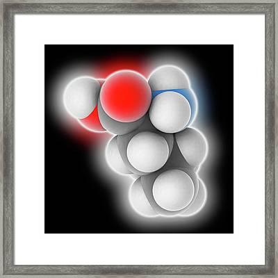 Leucine Molecule Framed Print