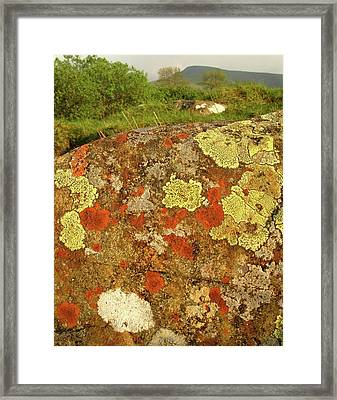Lichen Growing On Rock In Unpolluted Air Framed Print by Cordelia Molloy