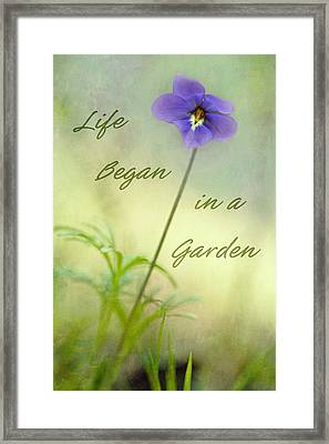 Life Began In A Garden Framed Print by Patricia Montgomery