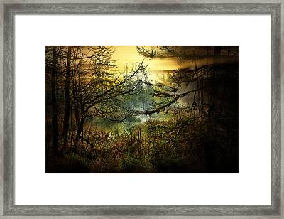 Life In The Forest Framed Print