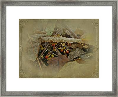 Life Is Bittersweet Framed Print by Mother Nature