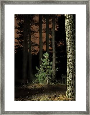 Lightpainting The Pine Forest New Growth Framed Print