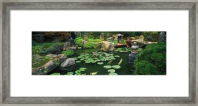 Lilies In A Pond At Japanese Garden Framed Print by Panoramic Images
