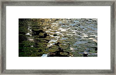 Lilly Pad Abstraction Framed Print