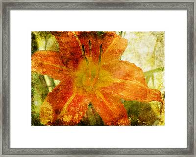 Lilly Framed Print by Steven Michael