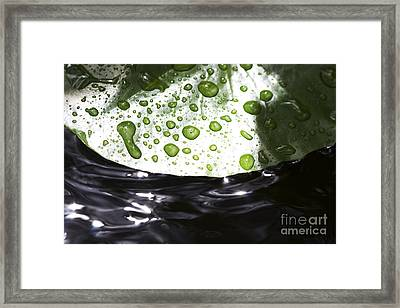 Lillypad Droplets Framed Print