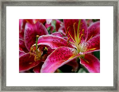 Lily Bee Framed Print