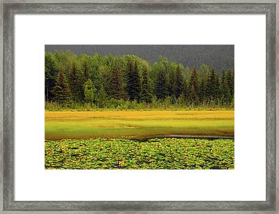 Lily Pods And Sedge Grass In Autumn Framed Print by Michel Hersen
