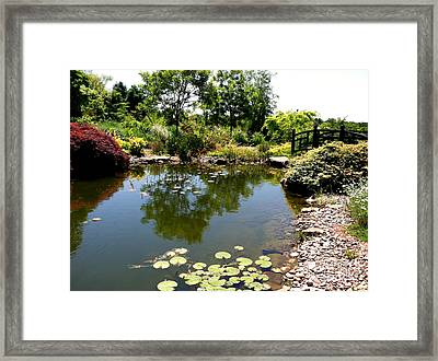 Lily Pond At Paxson Hill Framed Print by Addie Hocynec