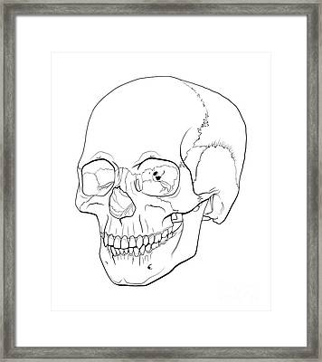 Line Illustration Of A Human Skull Framed Print
