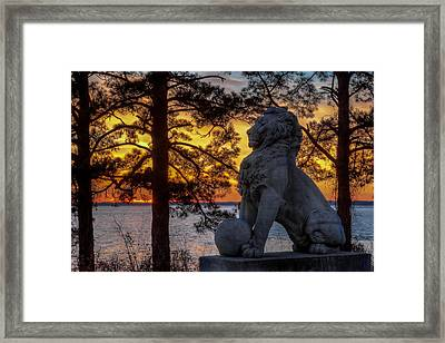 Lion At Sunset Framed Print
