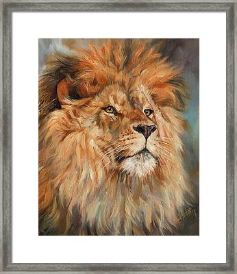 Lion Framed Print by David Stribbling