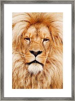 Lion Portrait Framed Print by Tilen Hrovatic