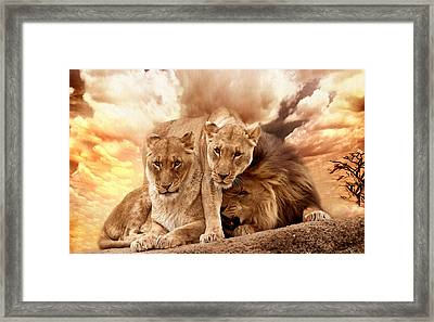 Lions Framed Print by Christine Sponchia