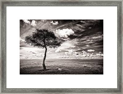 Lions In The Shade - Selenium Toned Framed Print by Mike Gaudaur