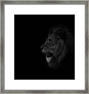 Lions Roar Framed Print