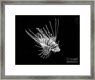 Little Lionfish Framed Print