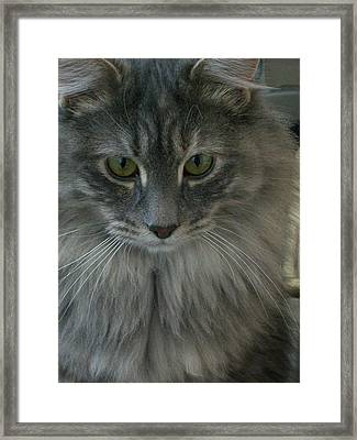 Little Miss Framed Print by Jewel Hengen