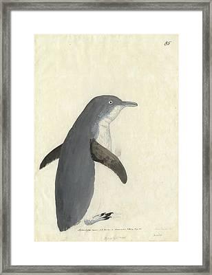 Little Penguin Framed Print by Natural History Museum, London