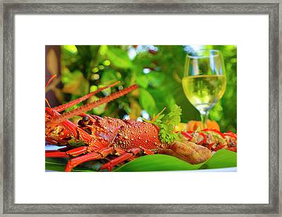 Lobster, Fiji Framed Print by Douglas Peebles