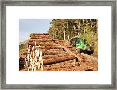 Logging On The Slopes Above Thirlmere Framed Print