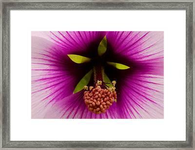 Sweet Nectar Framed Print by Lon Goudey