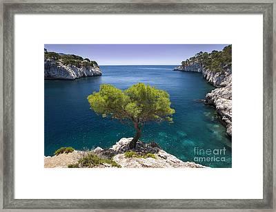 Lone Pine Tree Framed Print