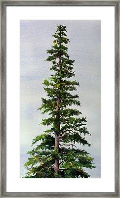 Framed Print featuring the painting Lone Spruce by Karen Mattson