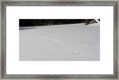 Lone Tracks Framed Print
