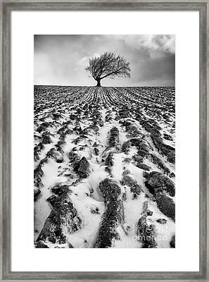 Lone Tree Framed Print by John Farnan