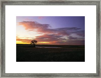 Lone Tree Pond Framed Print