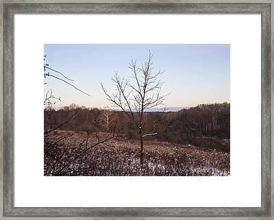 Lone Tree Framed Print by Tim Fitzwater