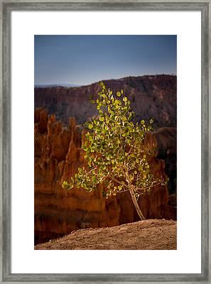Lonely Aspen Framed Print