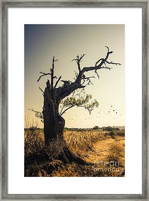 Lonely Tree Framed Print by Carlos Caetano