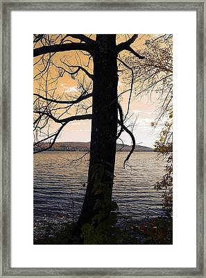 Lonely Tree   Framed Print by Mark Ashkenazi