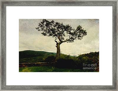 Framed Print featuring the photograph Lonely Tree by Trina  Ansel