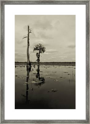 Lonesome Framed Print by Stellina Giannitsi
