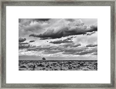 Lonesome Tree Bw Framed Print by Alan Tonnesen