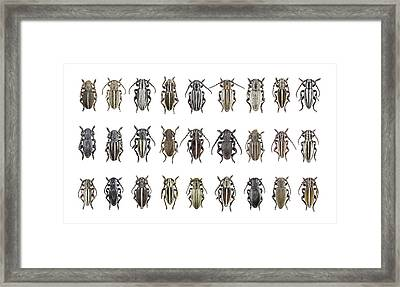 Longhorn Beetles Framed Print by F. Martinez Clavel