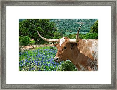 Longhorn Blue Framed Print by Robert Anschutz