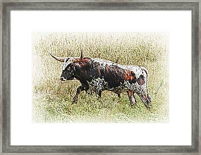 Framed Print featuring the photograph Longhorn Bull - A Strong Portrait by Bill Kesler