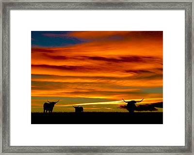 Longhorn Sunset Framed Print