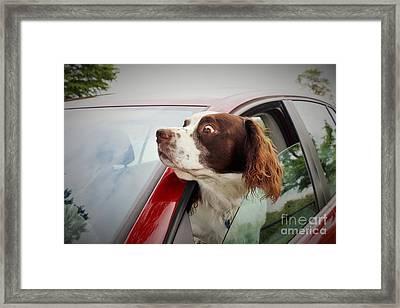 Look... Framed Print by Katy Mei