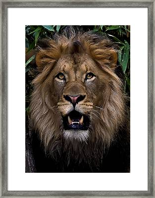 Looker Framed Print