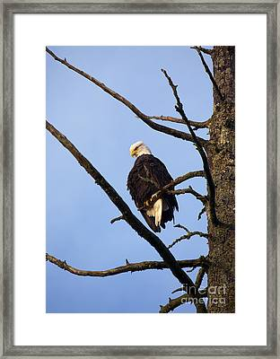 Looking Down On The World Framed Print by Mike  Dawson