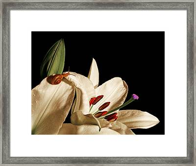 Looking For Alice Framed Print