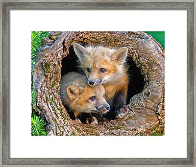 Looking For Trouble Framed Print by Jack Nevitt