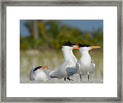 Looking Framed Print