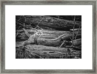 Looking Framed Print by Todd Bielby